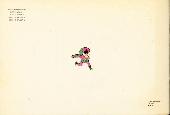 Verso de Little Nemo in Slumberland -3- Tome 1