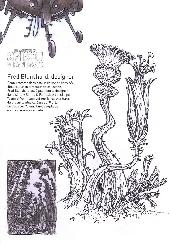 Extrait de Spirou et Fantasio -53ES-  Dans les griffes de la Vipère