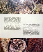 Verso de (AUT) Hausman -10- La forêt secrète