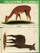 Verso de Pifou (Poche) -115- Lima le lama